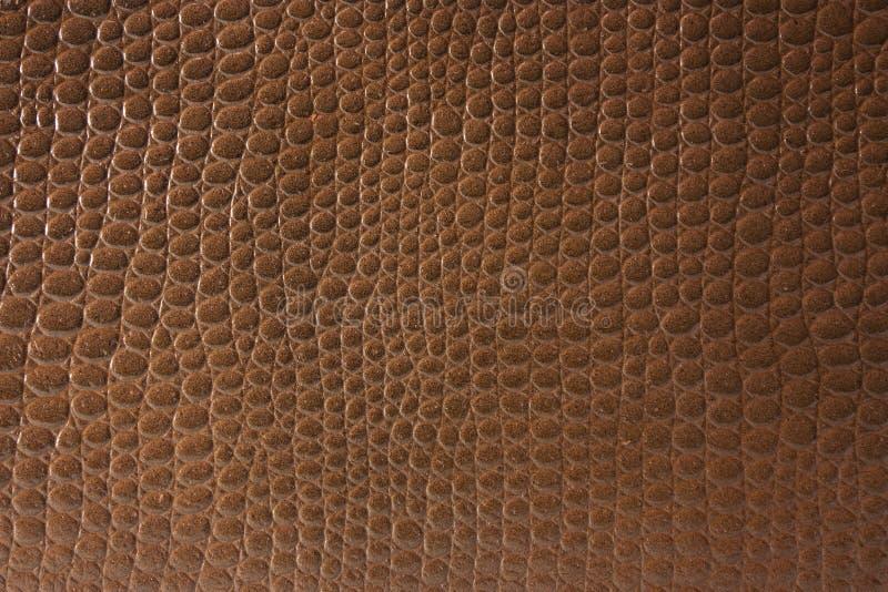 Texture de peau de crocodile photos libres de droits