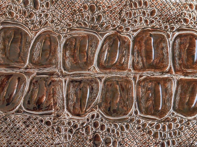 Texture de peau de crocodile photos stock