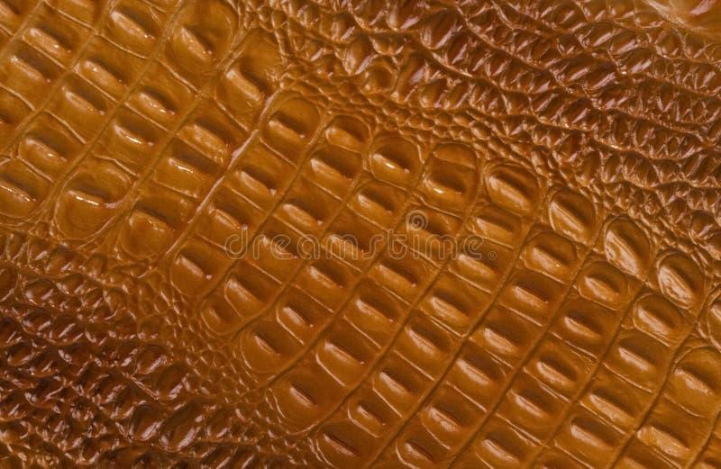 Texture de peau de crocodile de Brown image libre de droits