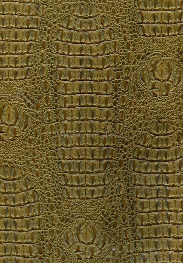 Texture de peau de reptile photos libres de droits