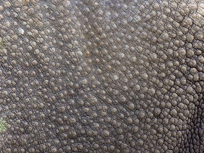 Texture de peau de rhinocéros noir photo stock