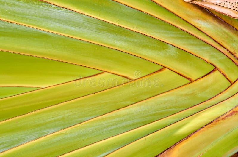 texture de plan rapproché d'une palmette, fond abstrait géométrique images stock