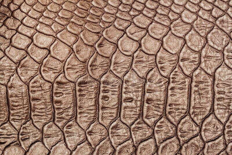 Texture de plan rapproché de cuir véritable, de relief sous la peau de squama un crocodile brun clair, fond photographie stock