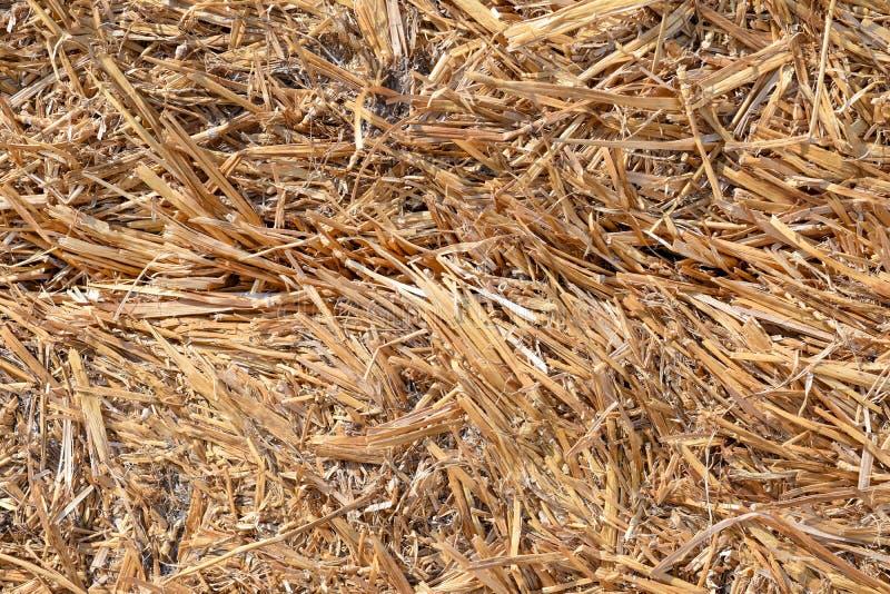 Texture de plan rapproché de foin d'herbe sèche photo stock