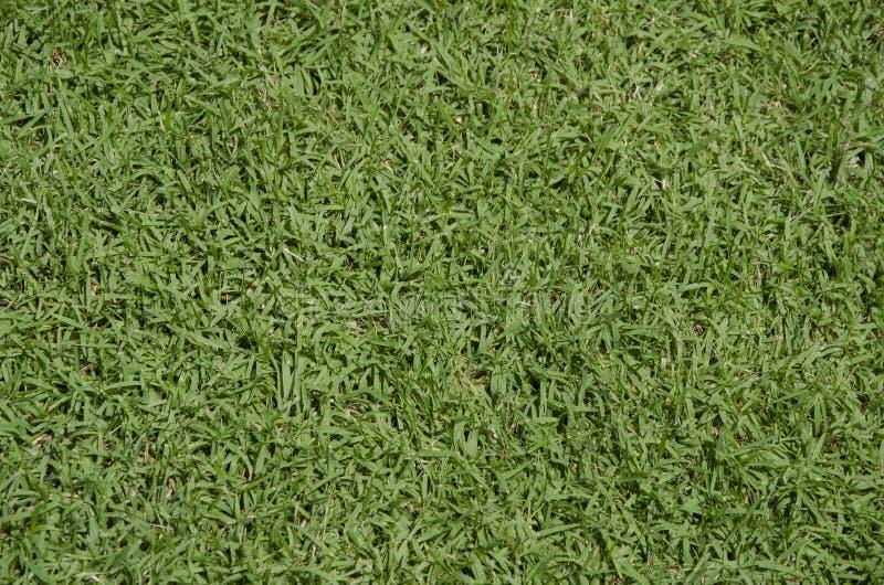 Texture de plancher de gazon d'herbe verte photo libre de droits