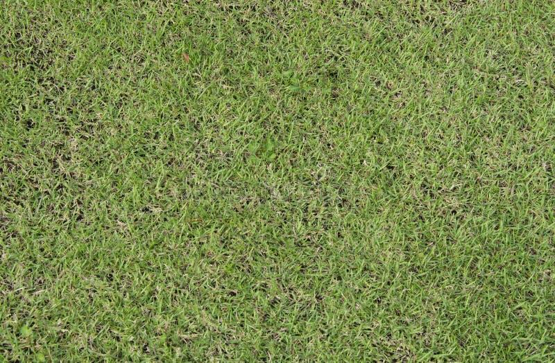 Texture de plancher de gazon d'herbe verte photographie stock libre de droits