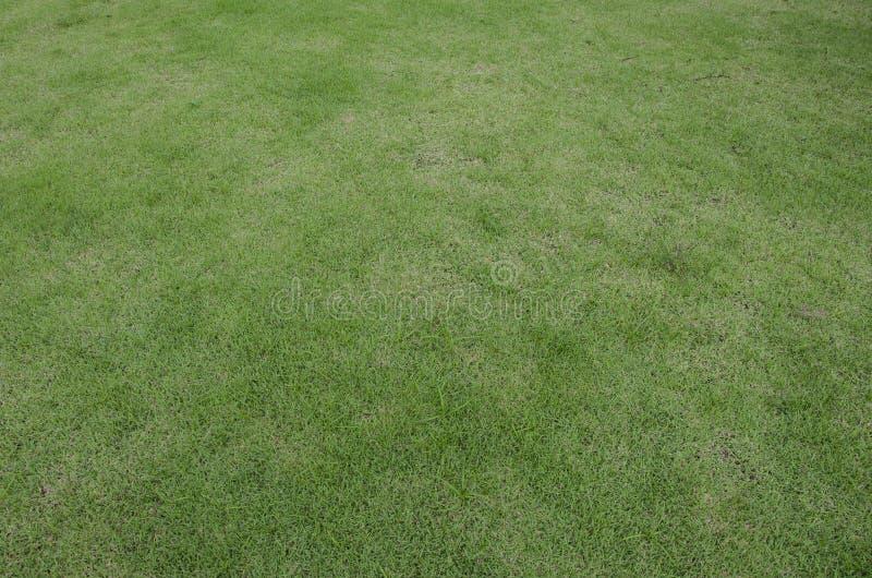 Texture de plancher de gazon d'herbe verte photo stock