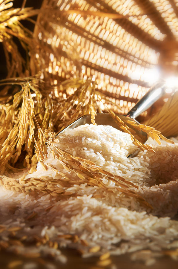 Texture de riz photo stock