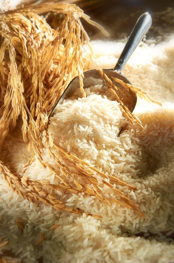 Texture de riz images libres de droits