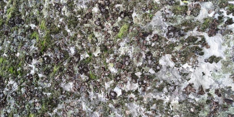 Texture de roche avec les champignons et la mousse photos libres de droits