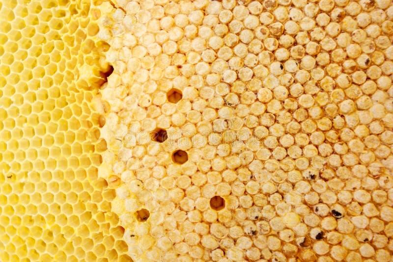 Texture de ruche images libres de droits