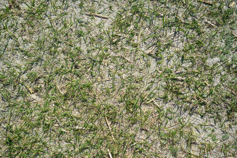 Texture de Sandy Lake Shore avec l'herbe images stock