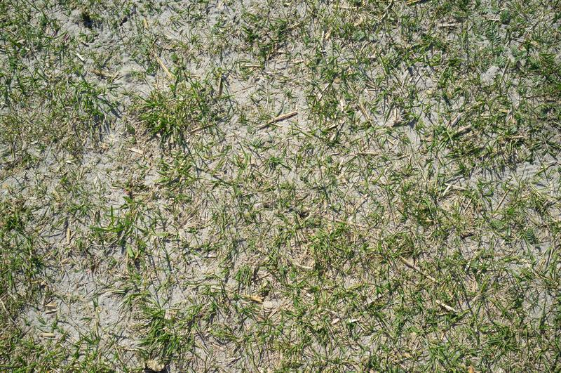Texture de Sandy Lake Shore avec l'herbe photos stock