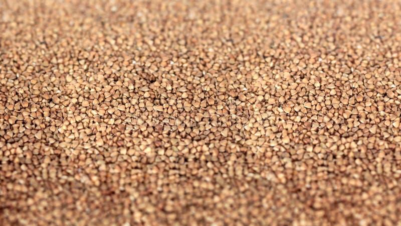 Texture de sarrasin Textures des grains crus de sarrasin Nourriture saine Vue supérieure photos libres de droits