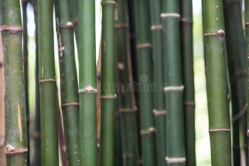 Texture de surface approximative de bambou images stock