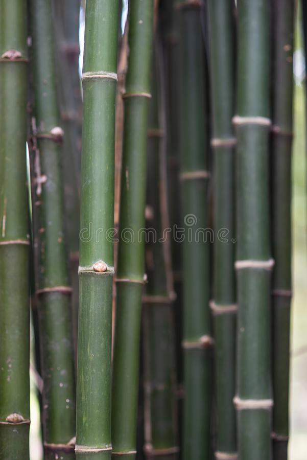 Texture de surface approximative de bambou image libre de droits