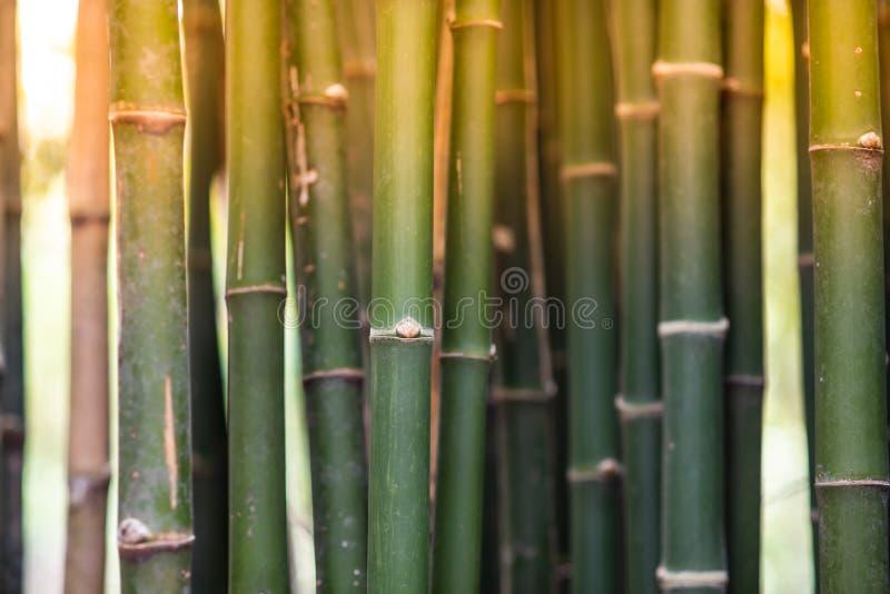 Texture de surface approximative de bambou photos libres de droits