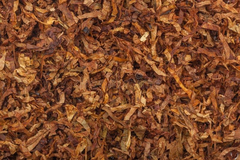 Texture de tabac La grande feuille de tabac sec de haute qualité de coupe, se ferment, fond images stock