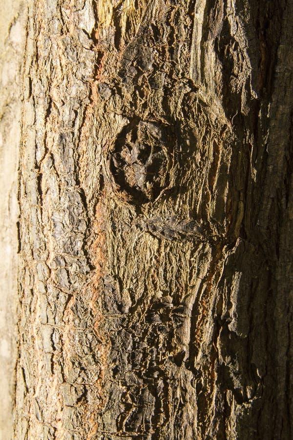 Texture de troncs d'arbre avec le noeud en bois image libre de droits
