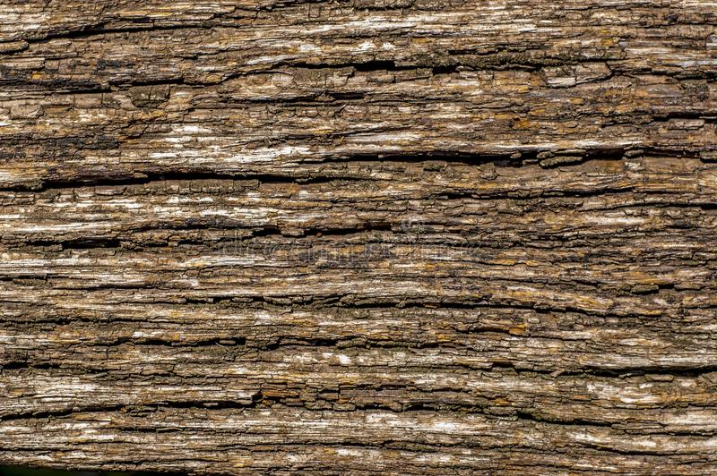 Texture de vieille écorce de chêne photos libres de droits