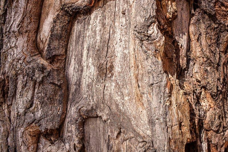 Texture de vieux bois image libre de droits