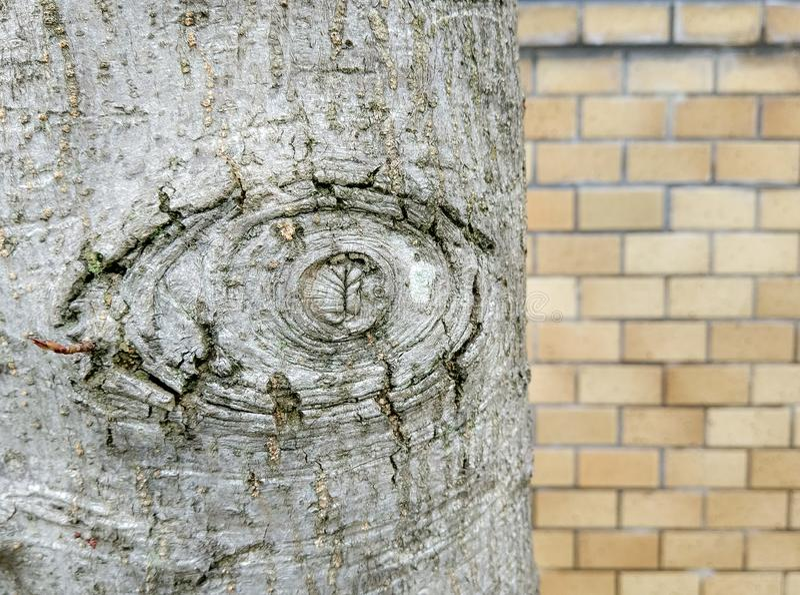 Texture de vieux bois avec l'écorce images libres de droits