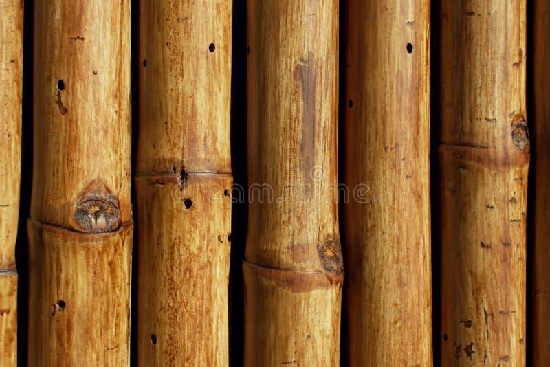 Texture des arbres en bambou en gros plan photos libres de droits