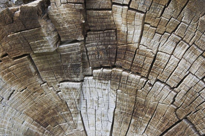 Texture des boucles d'arbre photos stock