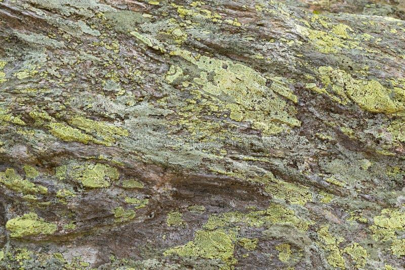 Texture des dépôts jaunes verts de lichen de carte sur des roches dans le haut MOU images libres de droits