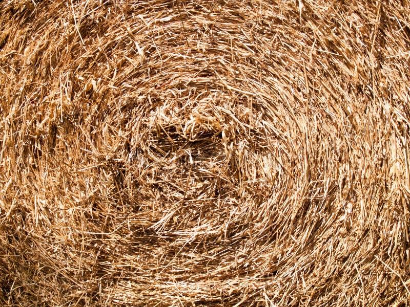 Texture des feuilles sèches de foin qui est utilisation de cercle pour des fonds d'image photographie stock
