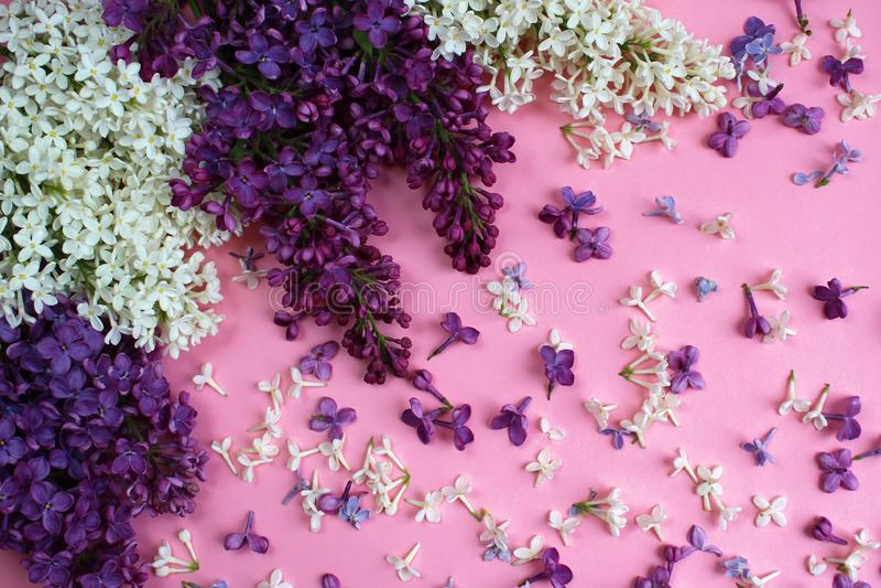 Texture des fleurs du lilas sur un fond rose photos stock