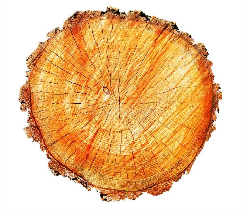 Texture down tree on white background. Texture sawn down tree on white background is insulated stock photos