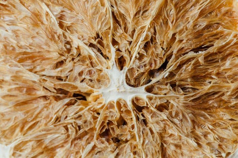 Texture of dried citrus.Macro royalty free stock photo