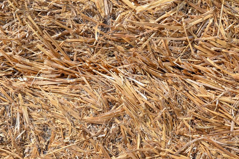 Texture of dried grass hay close-up stock photo