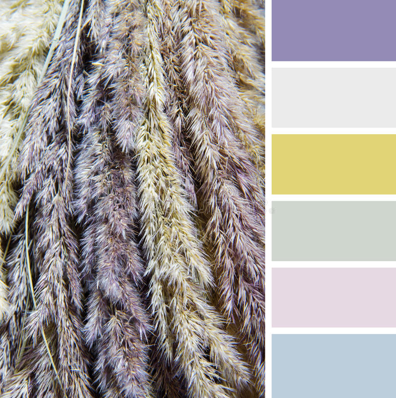 Texture of dry grass , colour palette swatches. Lilac royalty free stock photography