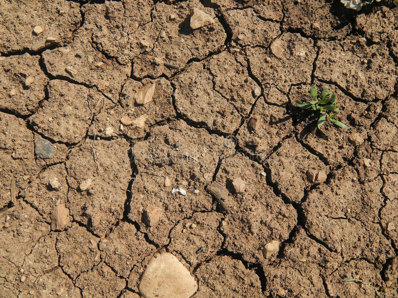 The texture of dry ground with cracks. Close up royalty free stock photos