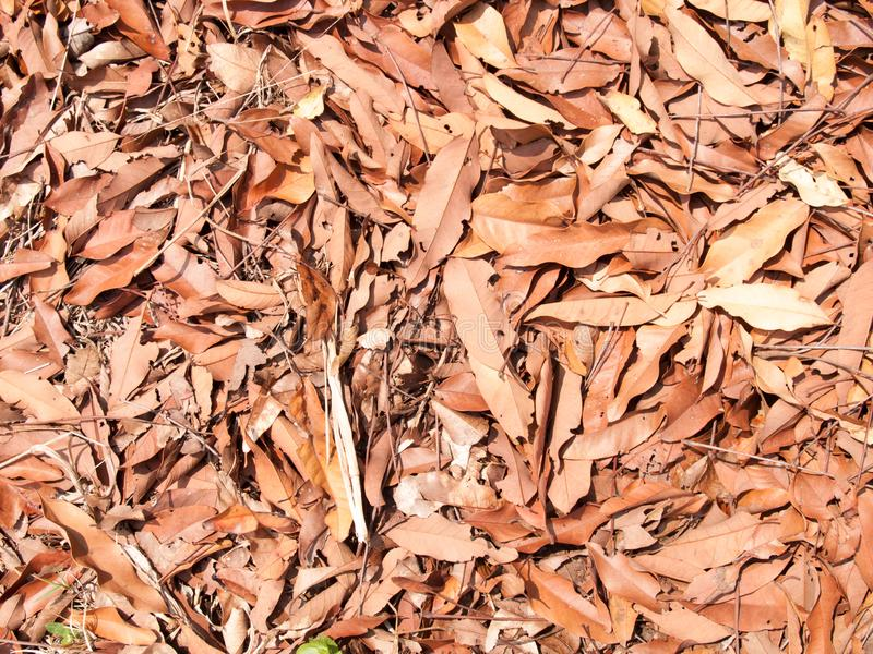 Texture of dry leaves use for backgrounds images stock photo