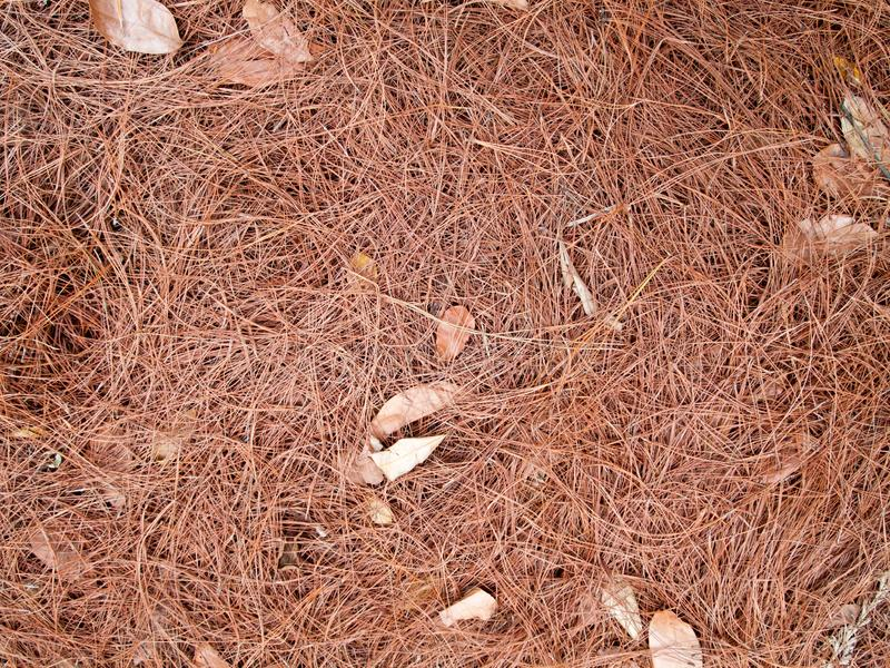 Texture of dry leaves use for backgrounds images.  stock photos