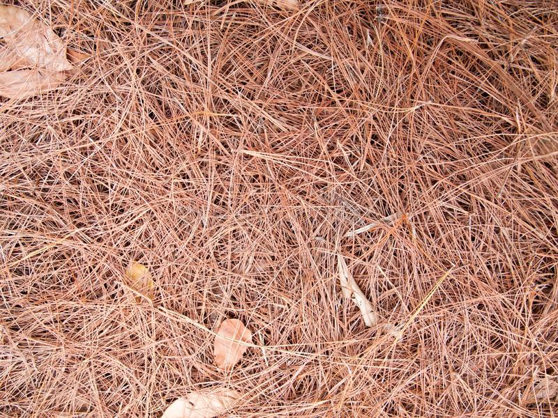 Texture of dry leaves use for backgrounds images stock images