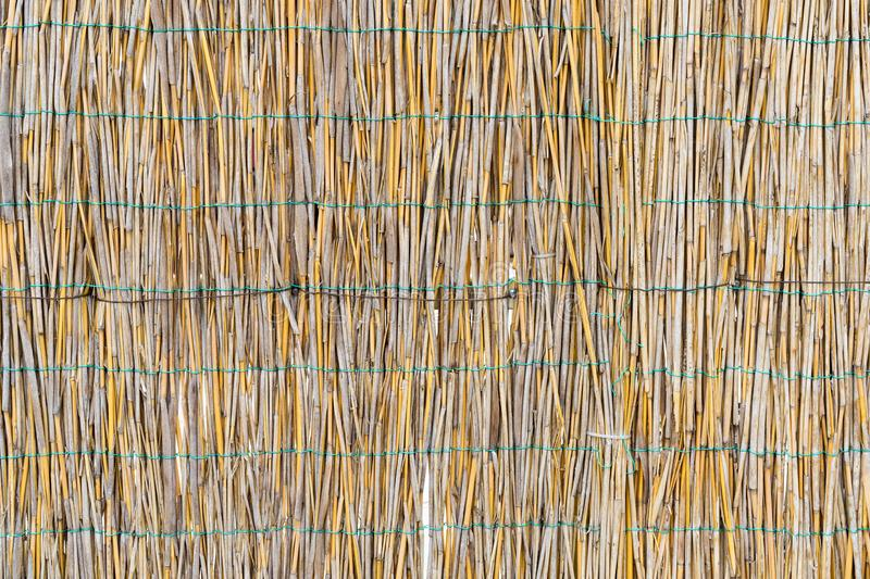 The texture of the dry reeds. Yellow reeds. A fence made of reeds. Dry grass stock images