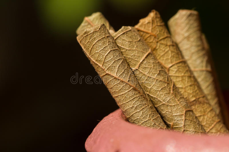 Texture of dry tobacco leaf. Traditional Indian cigarettes. Macro photo. Pot, vase from clay, beautiful, showcase, still life, souvenirs, poison, Indian tobacco royalty free stock image