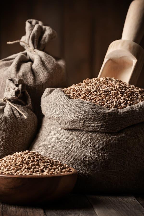 Texture du blé dans les sacs images libres de droits