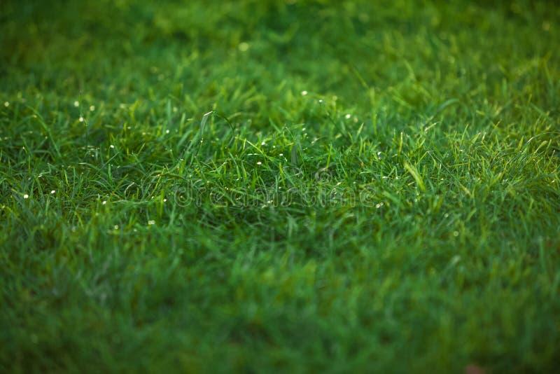 Texture of emerald green grass lawn. Closeup texture of emerald green grass lawn royalty free stock photo