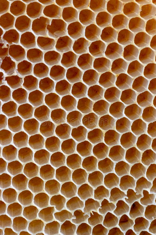 The texture of empty wax honeycombs built by bees, without human involvement royalty free stock images