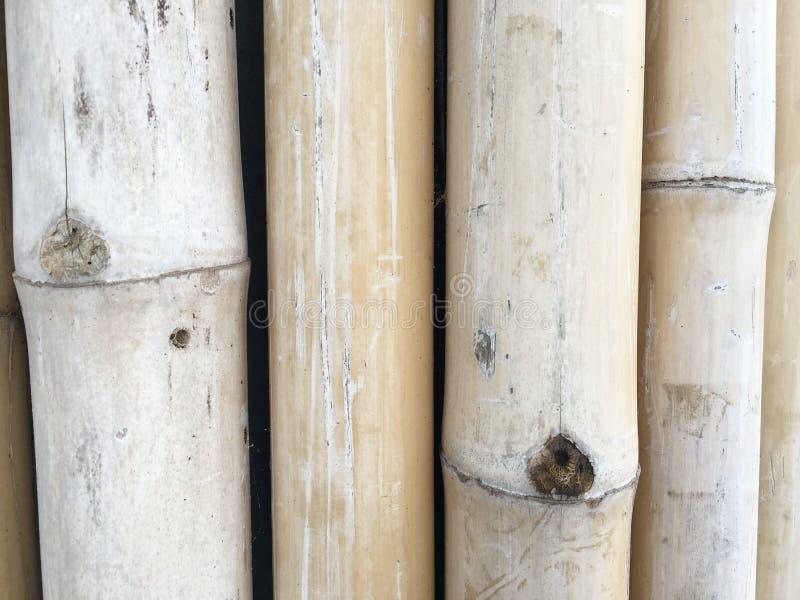 Texture en bambou d'arbre image stock
