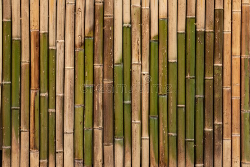 Texture en bambou, fond en bois, contexte en bambou de planche, papier peint images libres de droits