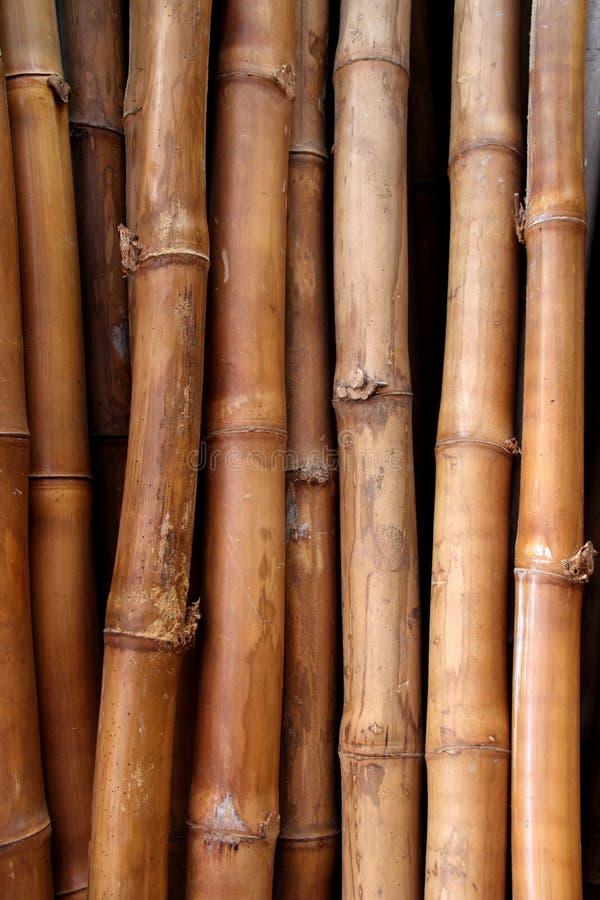 Texture en bambou sèche de joncteur réseau de canne image stock