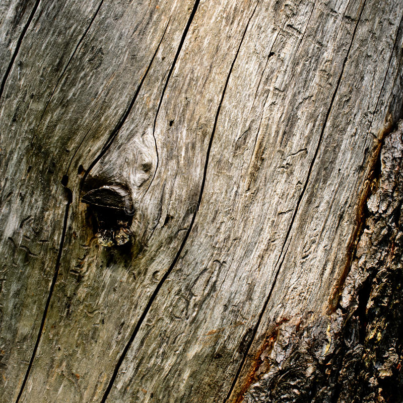 Texture en bois image libre de droits