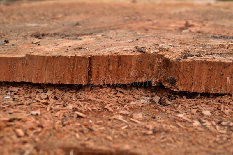 Texture en bois avec la scierie de sciure photographie stock libre de droits