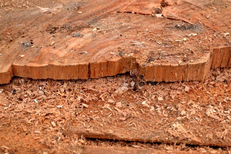 Texture en bois avec la scierie de sciure image stock